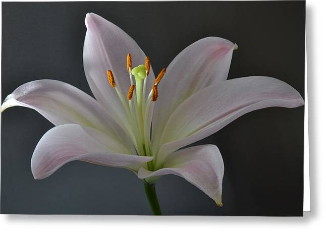 Focus On Lily. Greeting Card