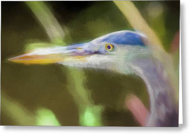 Focused Heron On Maryland Canal Greeting Card