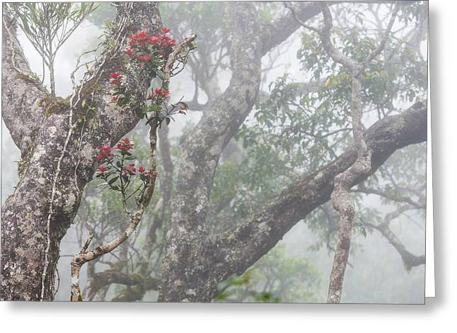 Fog And Flowers Greeting Card