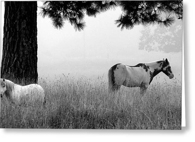 Greeting Card featuring the photograph Fog Bound by Julia Hassett
