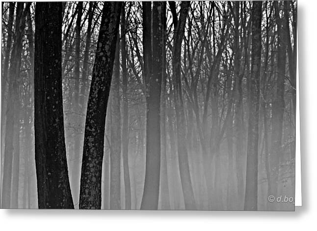 Fog In The Dark Forest Greeting Card