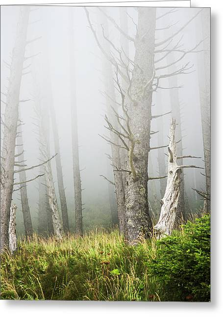 Fog In The Forest At Ecola State Park Greeting Card