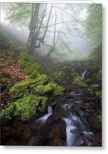 Fog In The Forest Greeting Card by Marilar Irastorza