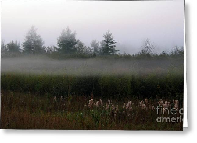 Fog Line Above Woodland Greeting Card by Andre Paquin