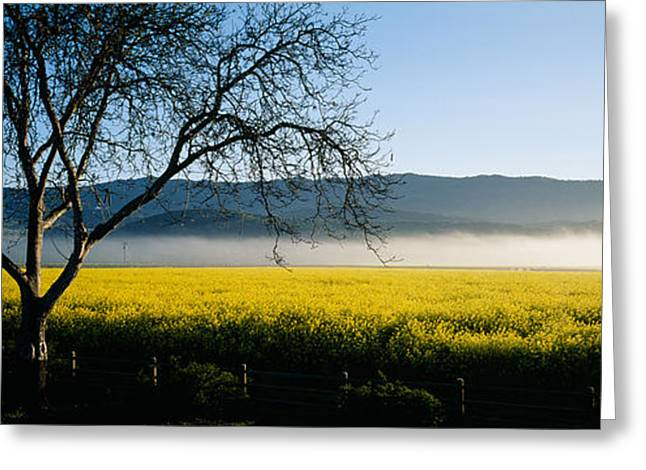 Fog Over Crops In A Field, Napa Valley Greeting Card by Panoramic Images