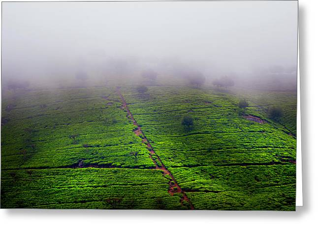 Fog Over Tea Plantations. Sri Lanka Greeting Card by Jenny Rainbow