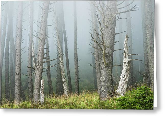 Fog Softens The Forest At Ecola State Greeting Card by Robert L. Potts