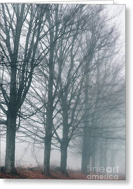 Foggy Autumn Morning Greeting Card by HD Connelly