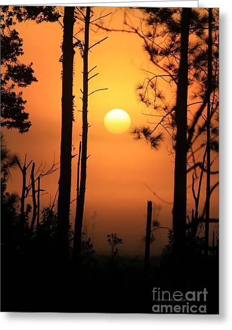 Foggy Day Sunrise Greeting Card by Deborah Benoit