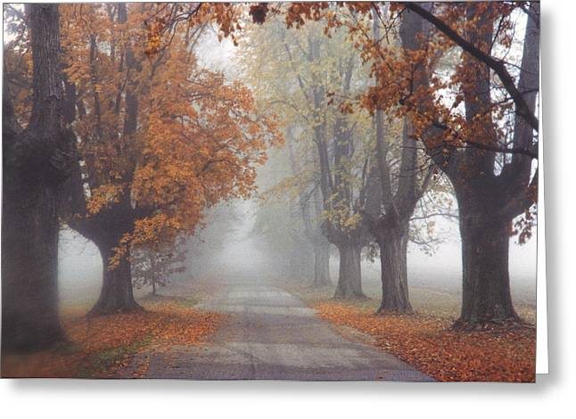 Foggy Driveway Greeting Card by Wendell Thompson