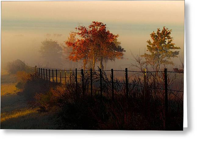 Foggy Field In The Morning Greeting Card