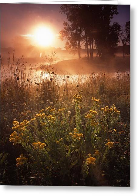 Foggy Flowers Greeting Card by Ray Mathis