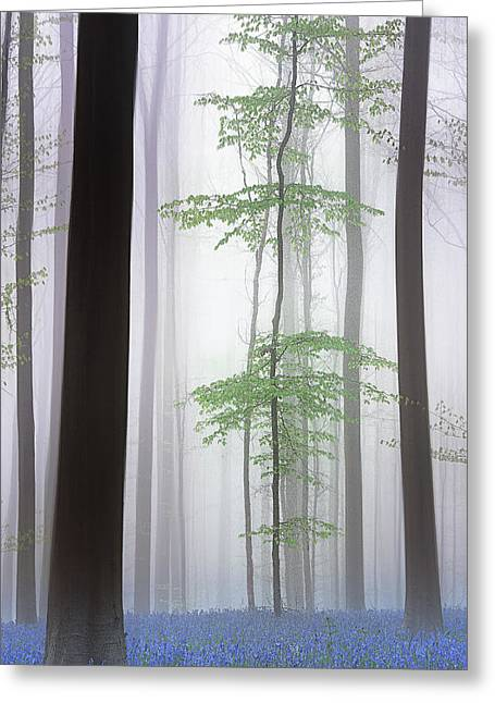 Foggy Forest .... Greeting Card
