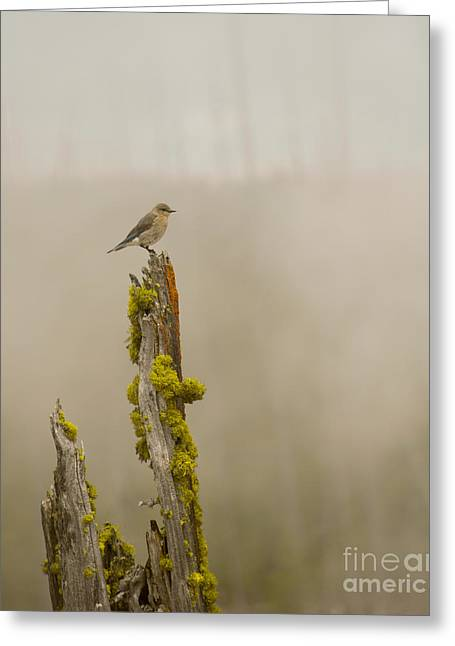 Foggy Friend Greeting Card by Birches Photography