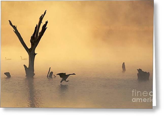 Foggy Landing Greeting Card by Elizabeth Winter