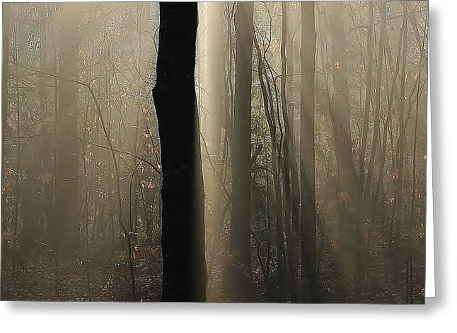 Greeting Card featuring the photograph Foggy Mornin' by Paul Noble