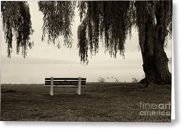 Foggy Morning At Stewart Park Greeting Card