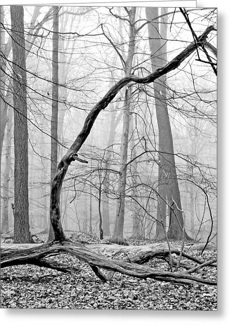 Foggy Morning Deciduous Forest Greeting Card