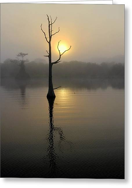 Foggy Morning Sunrise Greeting Card