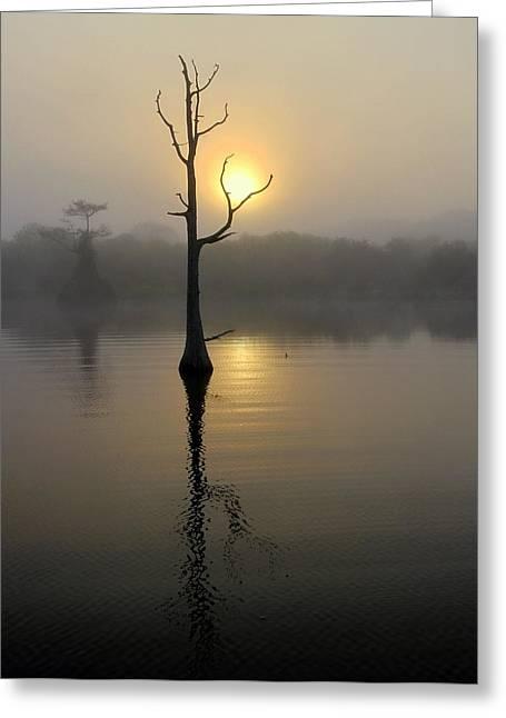 Foggy Morning Sunrise Greeting Card by Myrna Bradshaw