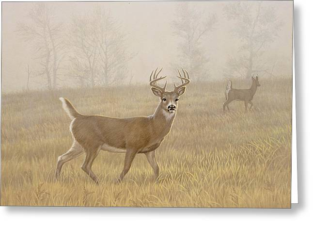 Foggy Morning-whitetail Greeting Card by Paul Krapf