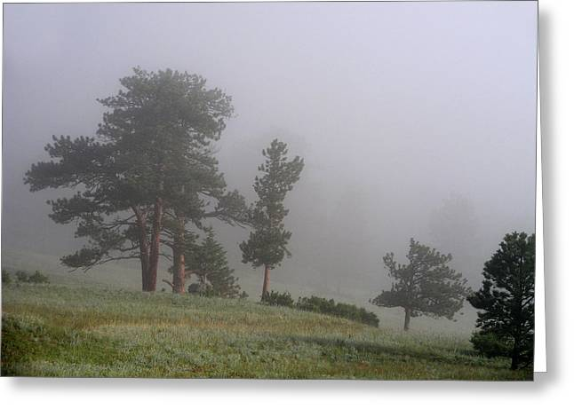 Greeting Card featuring the photograph Foggy Pines by Craig T Burgwardt