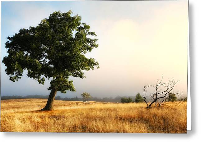 Foggy Summer Morning On Blue Ridge Parkway I Greeting Card by Dan Carmichael