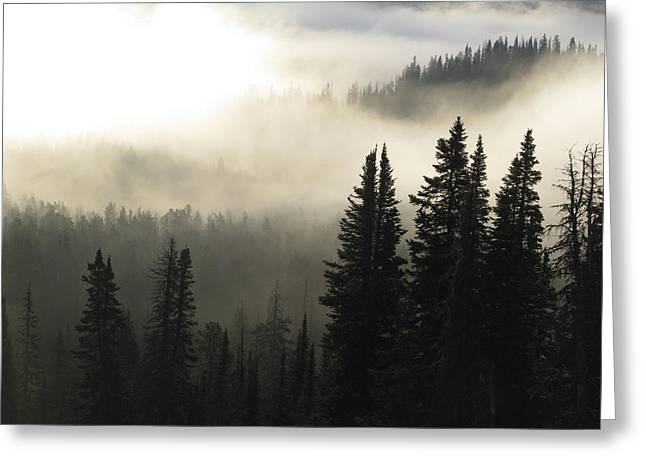 Foggy Sunrise At Yellowstone Greeting Card