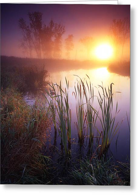Foggy Sunrise Greeting Card by Ray Mathis