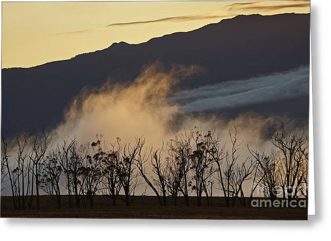 Foggy Sunset Greeting Card by Inge Riis McDonald
