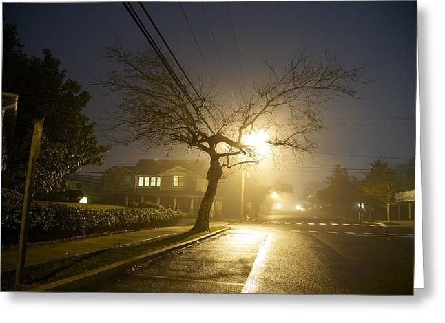Foggy Tree Greeting Card by Beau Finley