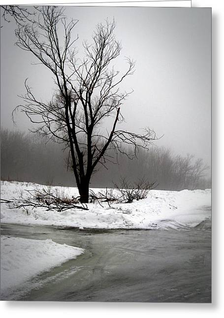 Greeting Card featuring the photograph Foggy Tree by Kimberly Mackowski