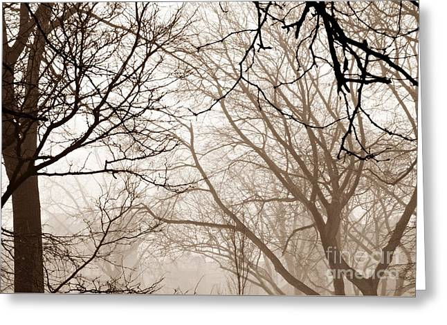 Foggy Winter Afternoon In Sepia Greeting Card