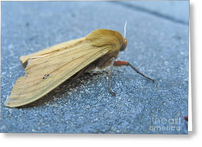 Fokker Moth Greeting Card