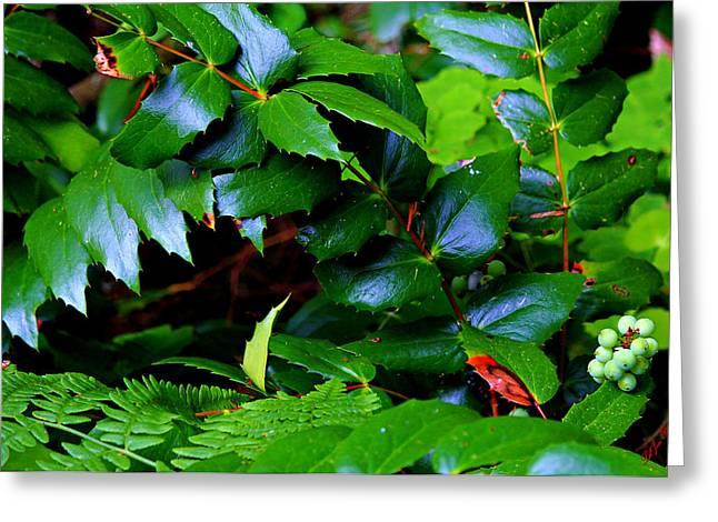 Foliage N Such Greeting Card