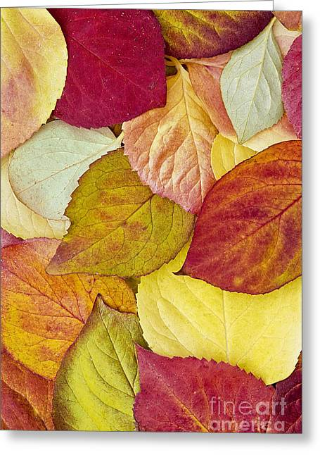 Foliage Quilt Greeting Card