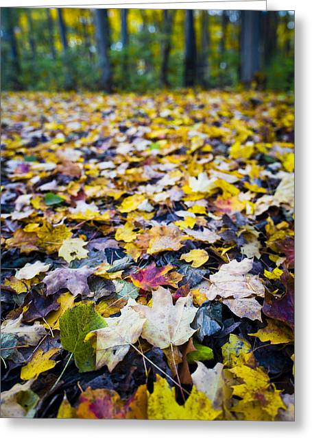 Foliage Greeting Card by Sebastian Musial
