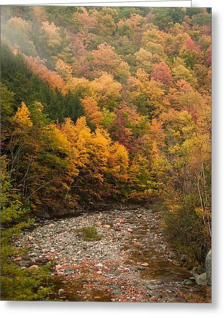 Foliage Views Near Florida Ma Greeting Card