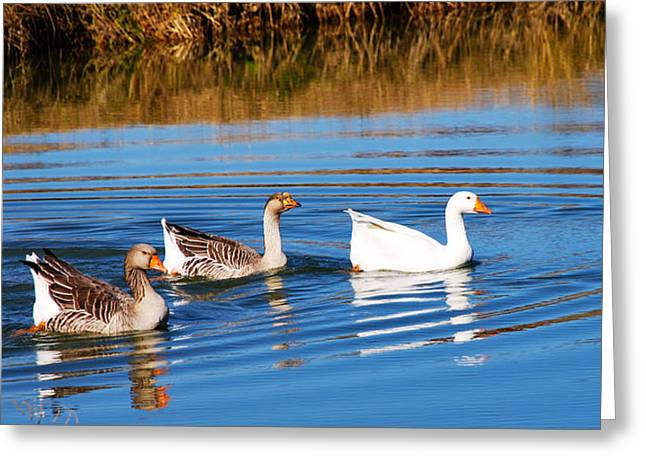 Follow The Leader 2 Greeting Card by Linda Segerson