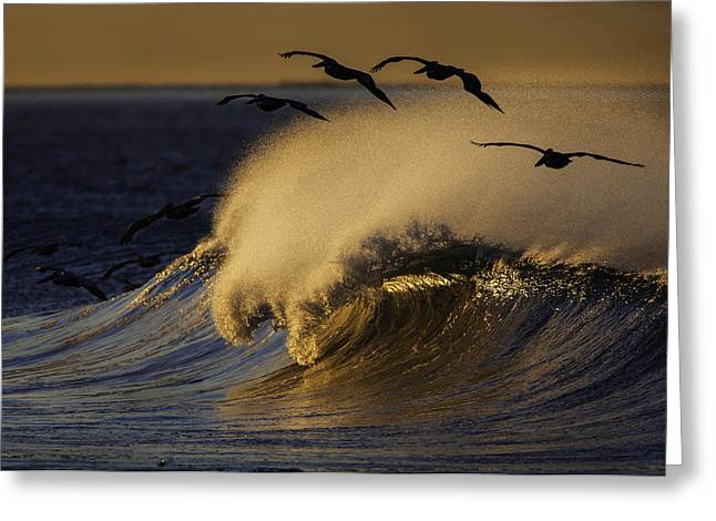 Greeting Card featuring the photograph Follow The Leader 73a2324 by David Orias