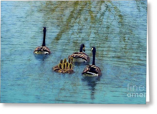 Follow The Leader Baby Greeting Card by Peggy Franz