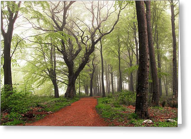 Follow The Red Path. Greeting Card