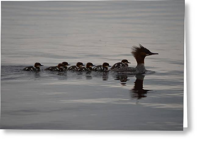 Following Mom Greeting Card by James Petersen