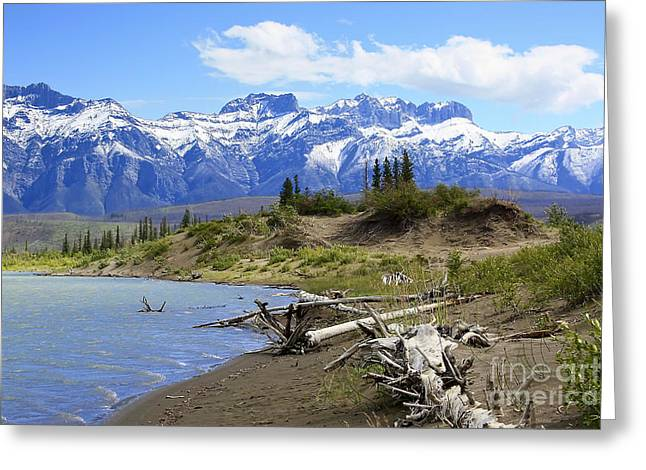 Following The Athabasca River Greeting Card by Teresa Zieba