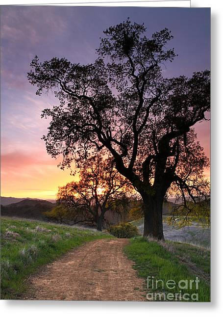 Following The Indian Trail To Where The Sun Dies Mt Diablo 2013 Greeting Card