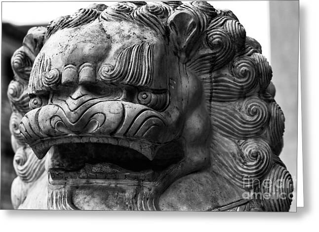Foo Dog Portrait Greeting Card by John Rizzuto
