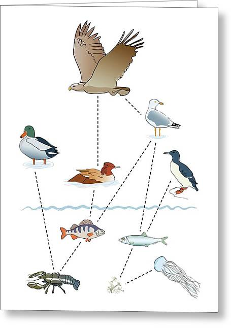 Food Chain Greeting Card by Jeanette Engqvist