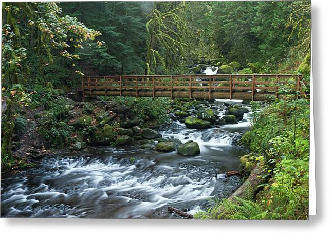 Footbridge Across Oneonta Creek Greeting Card by William Sutton