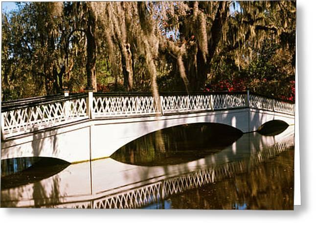 Footbridge Over Swamp, Magnolia Greeting Card by Panoramic Images