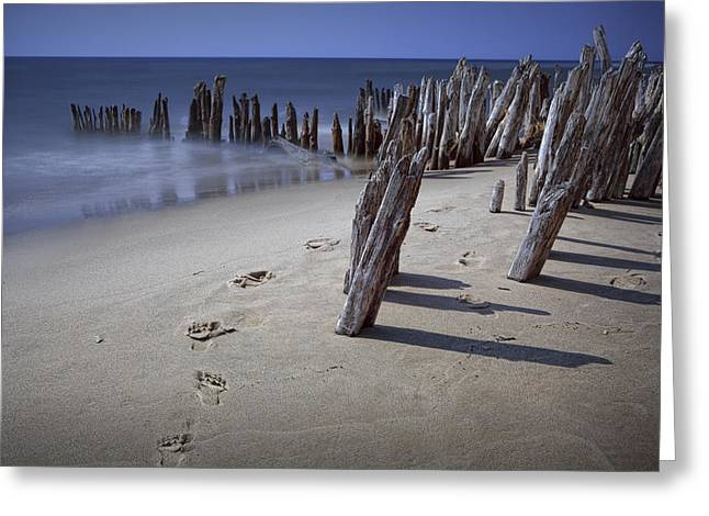 Footprints Along The Beach On Lake Michigan Greeting Card by Randall Nyhof
